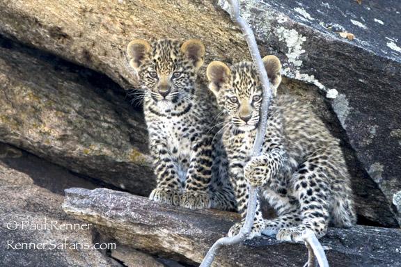 Leopard Cubs-