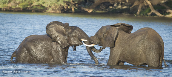 Water Game in Chobe River-
