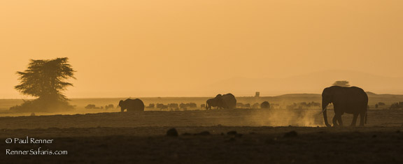 Dry, Dusty Evening-9515