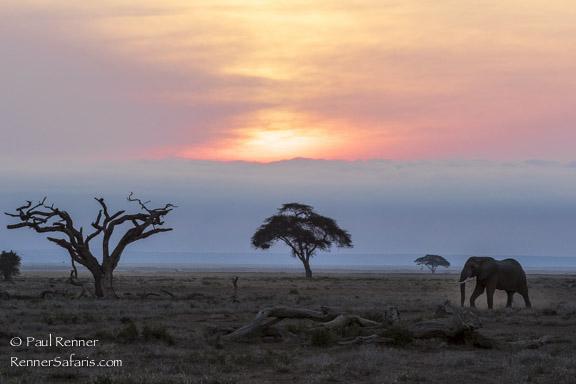 Elephant At Sunrise-