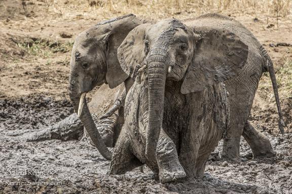 Elephant Mud Bath-0299
