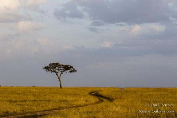 Road In The Mara-3326