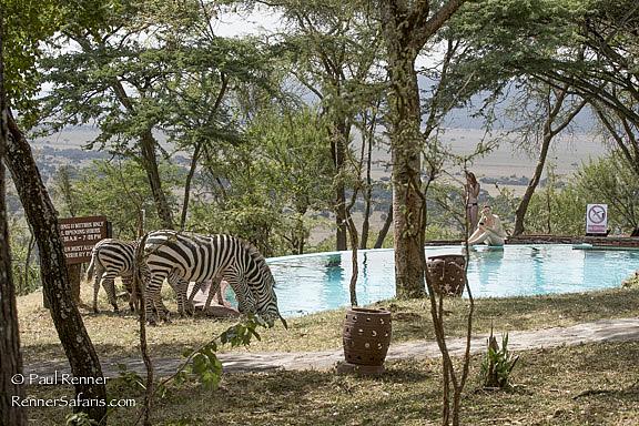 Zebras and Sunbathers-8796