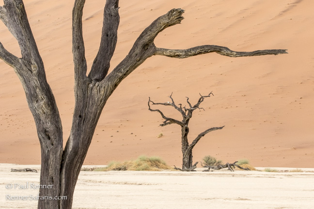 Camel Thorn Trees at Deadvlei, Namibia-2095