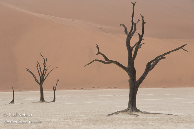 Camel Thorn Trees at Deadvlei, Namibia-4968