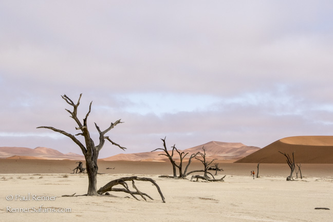 Camel Thorn Trees at Deadvlei, Namibia-5031