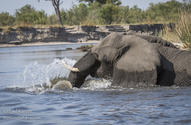 Elephant in River, Namibia-5104