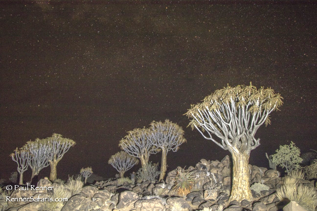 Quiver Trees and Namibia Night Sky-3966