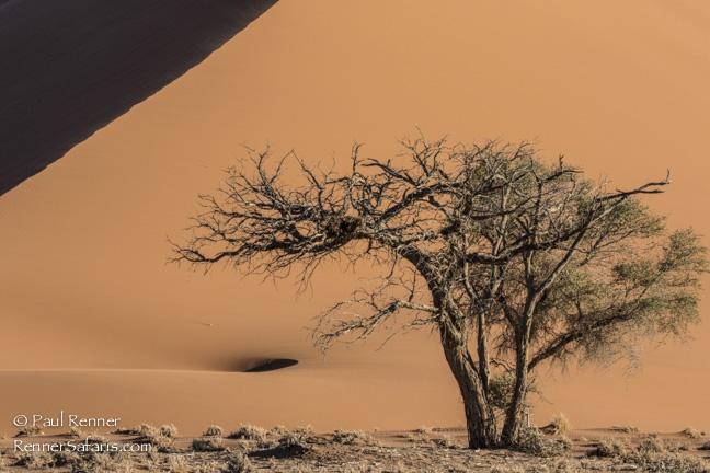 Sand Dunes in Namib Desert, Namibia-2010