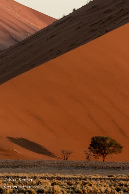 Sand Dunes in Namib Desert, Namibia-4853