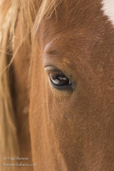Wild Horse in Namibia-1401