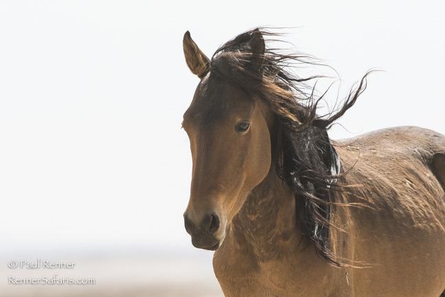 Wild Mustang, Namibia-4203