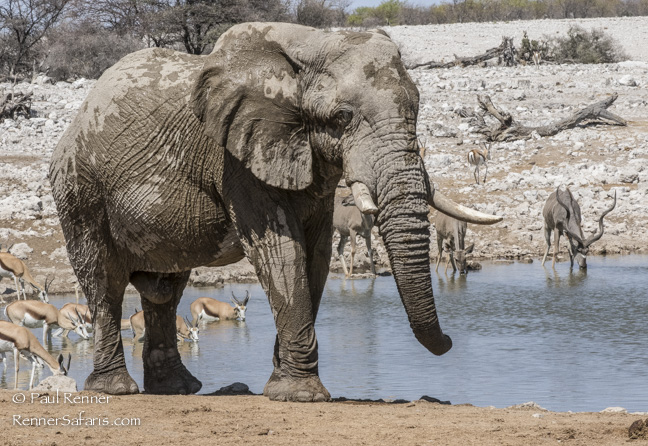 Wildlife at Water Hole, Namibia-3393