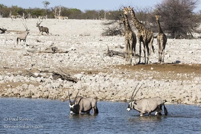 Zebra, Giraffe, Oryx, Kudu at Waterhole, Namibia-7336