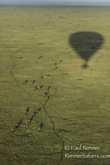 Balloon Shadow-6636