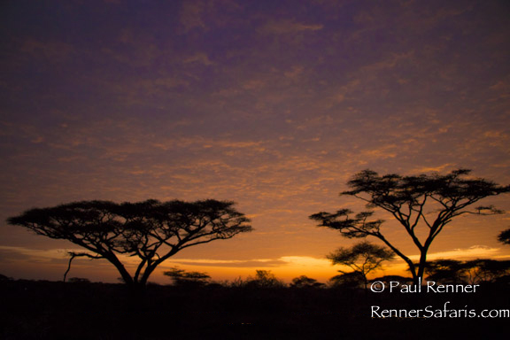 Serengeti Sunrise-8659