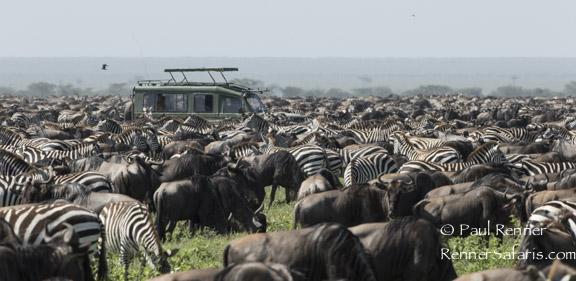 Vehicle in Herd-5674
