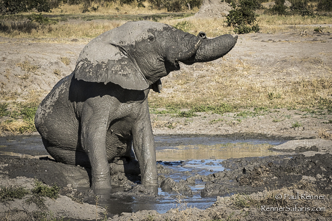 Elephant Sitting in Mud-9536