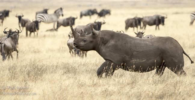 Black Rhino-9562-2