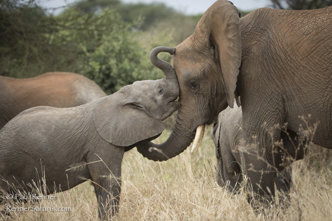 Elephant Affection-9184